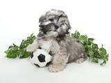 Scoccer Puppy Fotografisk trykk av  StockImage