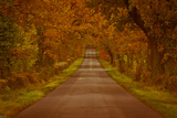 Walking the Autumnal Road Photographic Print by A photo by Fletche