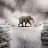 Baby-Elefant Fotografie-Druck von by Sigi Kolbe