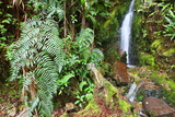 Stream from Mount Roraima in Venezuela Prints by  zanskar