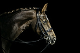 Chestnut Dressage Horse Groomed for a Contest Reproduction photographique par Anja Hild
