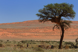 Antelopes in the Namib Desert Photographic Print by  Circumnavigation