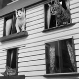 Kitten House Photographic Print by Douglas Grundy
