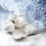 Sea Snails Photographic Print by MAIKA 777