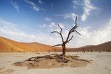 Deadvlei, Sossusvlei, Namibia Photographic Print by Ben Cranke