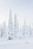 Snowy Forest in Winter Fotografisk trykk av  Risto0