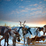 Northern Deer Prints by  Artpilot