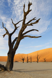 Dead Vlei, Sossusvlei, Namibia, Southern Africa Photographic Print by  Eyesee10
