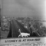 Sydney at Your Feet Photographic Print by Dennis Rowe
