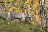Reindeer Prints by  _LeS_