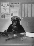 Chimp of Police Photographic Print by  FPG