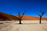 Dead Camel Thorn Trees.Dead Vlei. Namibia Photographic Print by David Cayless