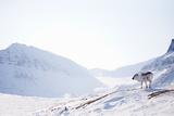Reindeer on Winter Landscape Posters by  leaf