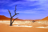 Dead Vlei, Sossusvlei Park Namibia Photographic Print by Brian Patrick Photography