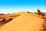 Sossusvlei Dunes Oryx Photographic Print by  mezzotint