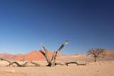 Red Dunes of Sossusvlei Fotografisk tryk af  schoolgirl