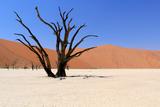 Sossusvlei Dead Valley Landscape in the Nanib Desert near Sesriem Photographic Print by Carlos Neto