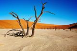 Namib Desert Photographic Print by  DmitryP