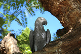 Parrot Stampa fotografica di  benshots