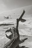 Desolation in the Namib Desert Fotodruck von  asiercu