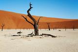 Dead Trees in Dead Vlei - Sossusvlei, Namib Desert, Namibia. Photographic Print by  DmitryP