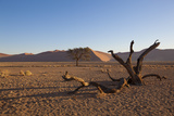 Landscape with Desert Grasses, Red Sand Dune and African Acacia Trees, Sossusvlei, Namibia, Souther Photographic Print by  DR_Flash