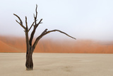 Tree Skeleton, Deadvlei, Namibia Photographic Print by Grobler du Preez
