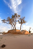 Heat, the Trees in A Desert Photographic Print by  Olexandr