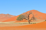 Grass and Dune Landscape near Sossusvlei, Namibia Photographic Print by Grobler du Preez