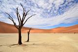 Deadvlei,Namib Desert,Namibia Fotografisk tryk af Karel Gallas