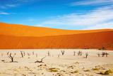 Dead Vlei - Sossusvlei, Namib Desert, Namibia Photographic Print by  DmitryP