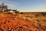 Red Dunes at Sunset, Kalahari Photographic Print by  halpand