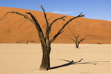 Dead Trees in Namibia Photographic Print by  rtwi