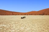Dead Vlei Namibia Photographic Print by  mezzotint