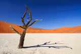 Dead Acacia Tree in Sossusvlei Pan, Namibia Photographic Print by  Checco