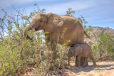 Female African Desert Elephant with Juvenile in Hoanib River Area, Namibia Prints by  Checco