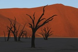 Dead Vlei Namib Desert Namibia Posters by  Nosnibor137