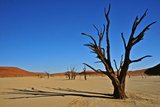 Dead Vlei Photographic Print by  Driveout