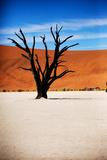 Black Tree Photographic Print by MJO Photo