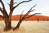 Dead Vlei in Namibia Photographic Print by Andrushko Galyna