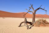 Namib Desert Photographic Print by Karel Gallas