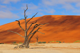 Lonely Tree Skeleton, Deadvlei, Namibia Photographic Print by Grobler du Preez