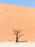 Lonely Dead Acacia Tree in the Namib Desert Photographic Print by Micha Klootwijk