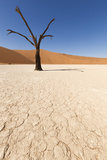 Dry Trees in Namib Desert Photographic Print by  DR_Flash