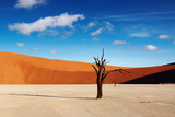 Namib Desert Photographic Print by  DmitryP
