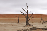 Tree Skeletons at Deadvlei, Namibia Photographic Print by Grobler du Preez