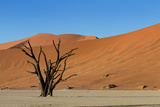 Dead Tree and Red Sand Dunes Photographic Print by  Circumnavigation