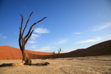 Dead Tree in Sossusvlei Photographic Print by  watchtheworld