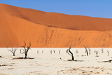 Sossusvlei Area in Namibia Photographic Print by  Checco