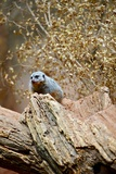 Meerkat on the Tree Photographic Print by  duallogic